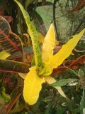 Yella van de bloemen natuurlijke schoonheid stock foto's