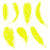 Yelleow feathers Stock Images