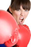 Yelling Boxer Stock Image