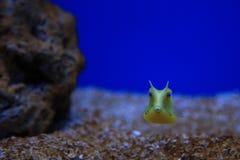 Yelliw łódź podwodna Zdjęcie Royalty Free