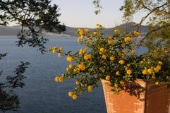 Yelllow blommar på Bracciano sjön Arkivfoto