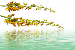 Yelllow-Blume - Großaufnahme Lizenzfreies Stockbild