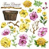 Yelllow floreale e rosa dell'elemento dipinto a mano illustrazione vettoriale