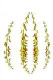 Yelllow kwiat Zdjęcie Stock