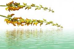 Yelllow kwiat - zakończenie widok Obraz Royalty Free