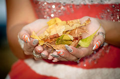 Yelllow leaves in the female hands Royalty Free Stock Photo