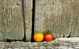 Yelllow and red cherry tomatoes on old shabby wooden background. Yellow and red cherry tomatoes staying in line in front of old shabby rustic wooden wall, copy stock photo