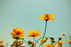 Yelllow vintage flowers on sky.  Stock Photos