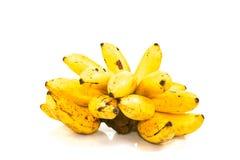 Yello banan från trädgården som isoleras på vit bakgrund Royaltyfri Foto