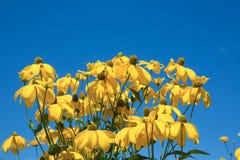 Yello blommor Arkivbild