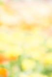 yello för bakgrund för stil för abstrakt blomma för suddighetsfärgnatur utomhus- Royaltyfria Foton
