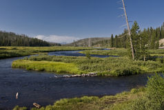Yelloswtone River Royalty Free Stock Images