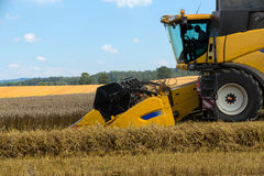 Yellov harvester on field harvesting gold wheat Royalty Free Stock Image