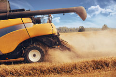 Yellov harvester on field harvesting gold wheat Stock Photo