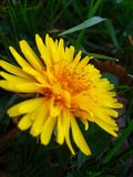yellow стоковое фото rf