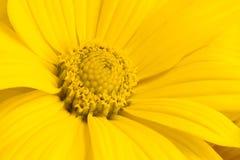 Yellow Royaltyfria Bilder