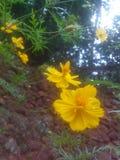 yellow Arkivfoto
