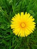 yellow Стоковые Фотографии RF