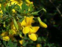 yellow Zdjęcie Royalty Free