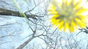 yellow Стоковое Изображение RF