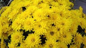 yellow Obrazy Stock