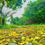 yellow Стоковая Фотография