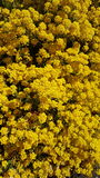 yellow стоковое фото