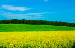 Yellow Allee Field Stock Photos