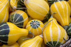 Yellow And Green Ornamental Pumpkins As Background Stock Photos