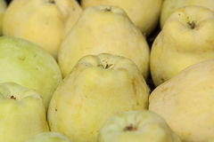 Yellow apple close-up. Royalty Free Stock Photo