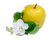 Yellow apple with flower Stock Photography