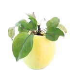 Yellow apple with leaves, isolated. Royalty Free Stock Images