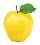 Yellow apple one. Yellow one apple fruit on white background stock photography