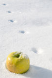 Yellow apple in the Snow Stock Photography