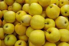 Yellow apple stacks detail. Mounds of yellow apples for market Stock Photography