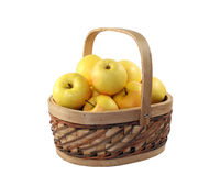 Yellow apples. In the  basket Royalty Free Stock Photography