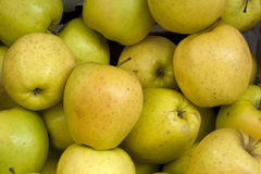 Yellow apples Stock Photo