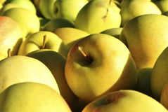 Yellow apples Royalty Free Stock Photography
