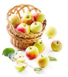 Yellow  apples in the basket Stock Image