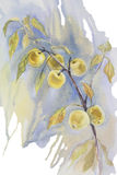 Yellow apples branch watercolor isolated. Yellow apples branch watercolor still-life on blue background Royalty Free Stock Photography