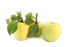 Yellow apples isolated. Royalty Free Stock Photography