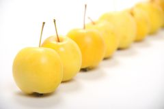 Yellow apples Royalty Free Stock Image