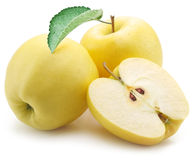 Yellow apples. Stock Photos