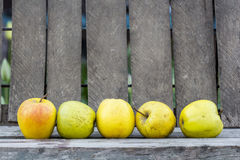 Yellow apples with wood background Royalty Free Stock Photography