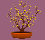 Yellow Apricot Flower, traditional lunar new year in Vietnam. Vector vector illustration