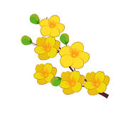 Yellow Apricot Flower, traditional lunar new year in Vietnam. Vector stock illustration