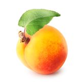 Yellow apricot with leaf Royalty Free Stock Photos