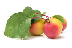 Yellow apricot with leaves Stock Photo