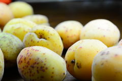Yellow apricots. On a dark background Royalty Free Stock Photos