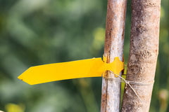 Yellow arrow pointer on tree Royalty Free Stock Photography